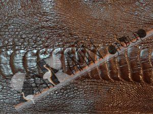 ساق شترمرغ